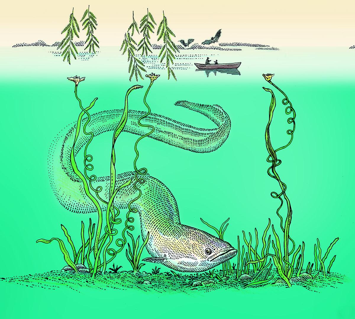 En illustrerad ål slingrar sig bland sjögräset i turkost vatten.